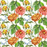 Watercolor Red rose with a dahlia. Hand painted flowers seamless pattern on a white  background. Watercolor floral  handmade illustration compliments prize Royalty Free Stock Photos