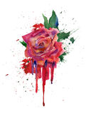 Watercolor red rose. Stock Images
