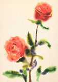 Watercolor red roses Royalty Free Stock Photography
