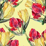 Watercolor red and yellow tulips. Floral seamless pattern on a cream background. Colorful tulip flower background hand illustration watercolor plants seamless Stock Photos