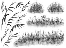 Watercolor Reeds and Grass. Watercolor painting. Hand drawn illustration. Set of monochrome reed branches, cane thicket and grass. Nature scene design element vector illustration