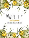 Watercolor reeds and yellow water lily background, greeting card template, artistic design background. Hand painted on a white background Stock Images