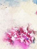 Watercolor Rhododendron flowers background Royalty Free Stock Image