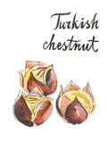 Watercolor roasted chestnuts Royalty Free Stock Photography