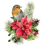 Watercolor robin, poinsettia with Christmas floral decor. Hand painted bird and traditional flower and plants: holly