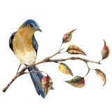 Watercolor robin redbreast sitting on tree branch with red and yellow leaves. Autumn illustration with bird and fall Stock Photo