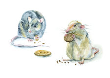 Watercolor rodents. Royalty Free Stock Photography