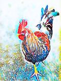 Watercolor rooster chicken. With brightly colored feathers Stock Photo