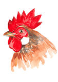 watercolor rooster stock image
