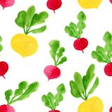 Watercolor root vegetables seamless pattern. Hand drawn ecological diet food background illustration. Yellow turnip, radish, stock image