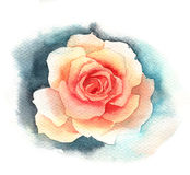 Watercolor rose Stock Photos
