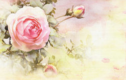 Watercolor rose background. Rose with buds, background watercolor style stock illustration