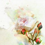 Watercolor rose and buds 2 Stock Photography