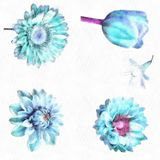 Watercolor Rose Camellia Dahlia Flower Tulip Illustration Of Beautiful Blue Flowers Set Of Spring Flowers Royalty Free Stock Image