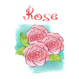 Watercolor rose Royalty Free Stock Photography