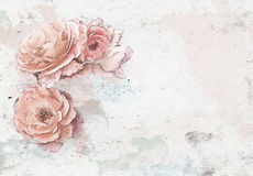Rose background watercolor  Stock Photography