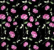 Watercolor rose flower art seamless wallpaper background. Long stem pink red roses elegant impressionist painting black background repeat pattern textile Stock Images