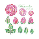 Watercolor rose flower compositions. Set on white background Stock Images