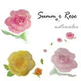 Watercolor   rose flowers Stock Image
