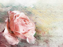 Watercolor rose on grunge wall texture  Royalty Free Stock Photos
