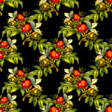 Watercolor rose hip seamless pattern on black background. Rosehip seamless pattern on black background, hand drawn watercolor illustration, design for fabric Stock Photography
