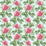 Watercolor rose illustration Stock Photography