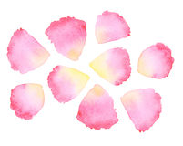 Watercolor rose petal Royalty Free Stock Images