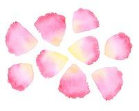 Watercolor rose petal. Design element stock illustration