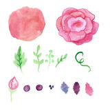 Watercolor rose, splash elements set. Vintage Stock Photos
