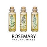 Watercolor rosemary oil stock image