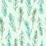 Watercolor Rosemary pattern seamless, green rosemary decoration, craft label design bio food. Vegetarian natural banner, restaurant menu background Stock Image