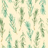Watercolor Rosemary pattern seamless, green rosemary decoration, craft label design bio food Royalty Free Stock Photography