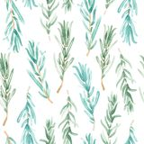 Watercolor Rosemary pattern seamless, green rosemary decoration, craft label design bio food Royalty Free Stock Photo