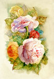 Watercolor Roses royalty free stock images
