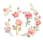 Watercolor roses bouquets set, isolated clip art. Gentle watercolor pink roses mini bouquets set isolated on the white background. Hand drawn lush buds royalty free illustration