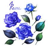 Watercolor roses collection Stock Photos
