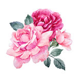 Watercolor roses composition. Beautiful composition with hand drawn watercolor roses Royalty Free Stock Photos