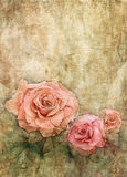 Watercolor roses on grunge wall texture Stock Photography