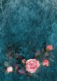 Watercolor roses on grunge wall texture 2 Stock Image