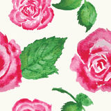Watercolor roses with leaves pattern on white background Stock Image