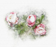 Roses pink watercolor Stock Photos