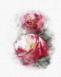 Roses red watercolor  Royalty Free Stock Images