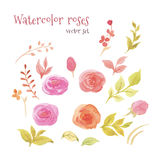 Watercolor roses. Watercolor set of floral elements, flowers, roses, leaf and sprigs. Vecror set can be used for greeting cards, wedding cards and invitations Stock Photos