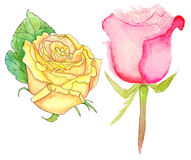 Watercolor roses, set. Set of hand drawn yellow and pink roses on white background Stock Image