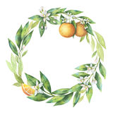 Watercolor round frame fruit orange branch isolated on white background. Royalty Free Stock Image