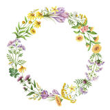 Watercolor round frame with medical plants. Stock Images
