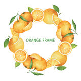 Watercolor round frame from oranges and tangerines. Design element for a healthy lifestyle, diet menu and eco food. Place for your text Royalty Free Stock Photography
