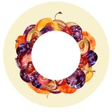 Watercolor round frame with whole and cut fruits: plums, cherries and peaches on a color background for creative design. Watercolor round frame with whole and Royalty Free Stock Images