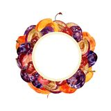 Watercolor round frame with whole and cut fruits: plums, cherries and peaches on a white background for creative design. Watercolor round frame with whole and Stock Photography
