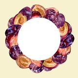 Watercolor round frame with whole and cut fruits plums on a color background for creative design. Watercolor round frame with whole and cut fruits plums on a Stock Photography